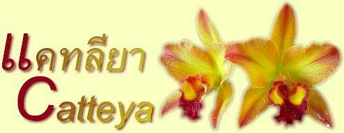 กล้วยไม้สกุลแคทลียา-CATTLEYA
