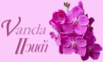 กล้วยไม้สกุลแวนด้า-VANDA