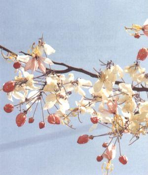 ดอกไม้ประจำจังหวัดราชบุรี-ดอกกัลปพฤกษ์