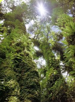 14 มกราคม วันอนุรักษ์ทรัพยากรป่าไม้ของชาติ