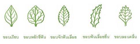 ขอบใบ (leaf margin)