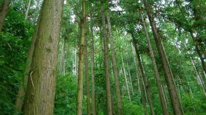 4 ธันวาคม วันสิ่งแวดล้อมไทย ป่าไม้