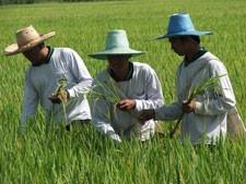 2 กุมภาพันธ์ วันเกษตรแห่งชาติ กับงานเกษตรแฟร์