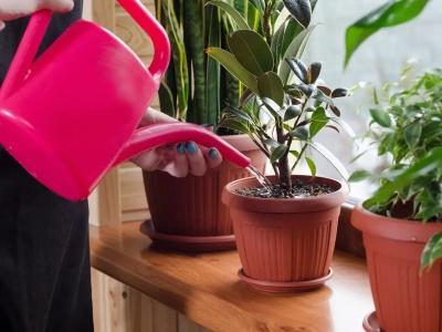 การให้น้ำ เทคนิคการปลูกไม้กระถาง