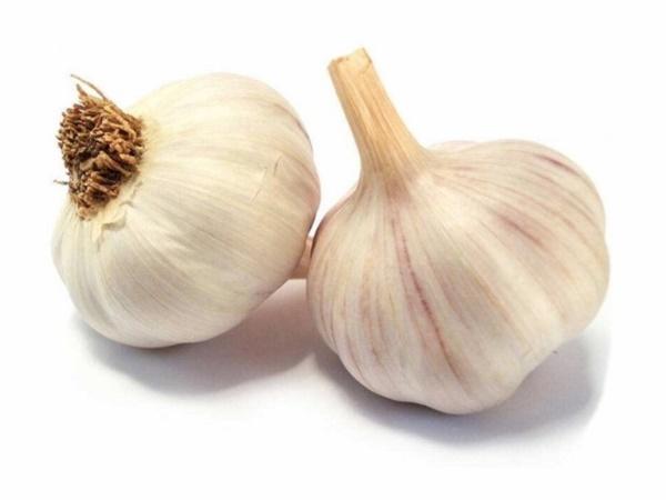 กระเทียม (Garlic) พืชเครื่องเทศ