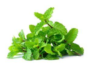 สะระแหน่ (Kitchen Mint) พืชเครื่องเทศ
